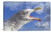 A sea bird Squawks, Canvas Print
