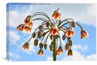 Sicilian Honey Garlic set against a Blue Sky, Canvas Print