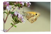 The Gatekeeper butterfly, Canvas Print