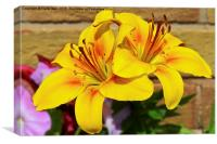 Beautiful yellow lilies, Canvas Print