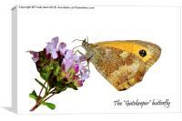 The Gatekeeper butterfly feeding, Canvas Print