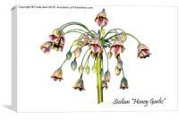 Sicilian Honey Garlic, Canvas Print