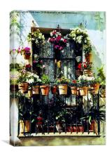 Florally 'decked out' window in Minorca, Canvas Print