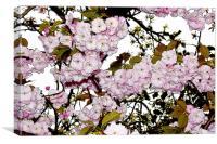 Cherry Blossom artistically portrayed, Canvas Print