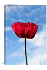 Beautiful Red Poppy, Canvas Print