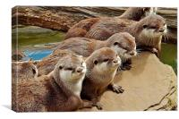 otter group, Canvas Print