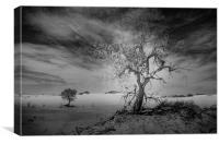 White Sands National Monument #1, mono(dark), Canvas Print