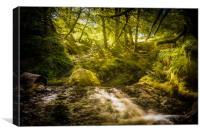 Sunlit Woodland Glade, Canvas Print