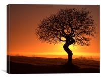 Twisted oak sunset silhouette, Canvas Print