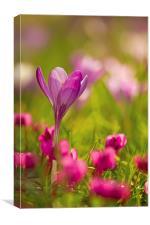 English Spring Flowers, Canvas Print