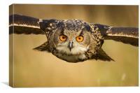 European Eagle Owl in Flight, Canvas Print