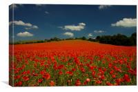 Summer Poppies, Canvas Print