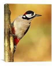 Autumnal Woodpecker, Canvas Print