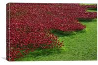 Poppies at the Tower of London , Canvas Print