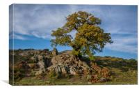 Old oak, Canvas Print