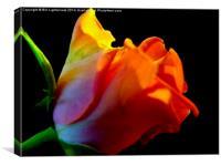 The Pink Rose Petals, Canvas Print