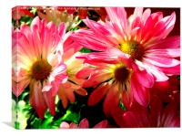 Sunlight on the Pink Chrysanthemum, Canvas Print