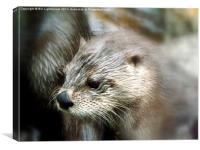 Canadian Otter, Canvas Print
