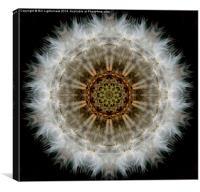 Dandelion Seedhead Circle, Canvas Print