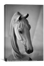 Equine Beauty, Canvas Print