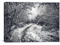 Snow Path, Canvas Print