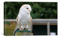Owl Watch, Canvas Print