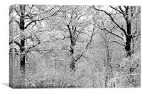 Winter Graphic, Canvas Print