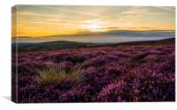 Amongst the Heather, Canvas Print