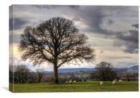 Marbury Hills, Canvas Print