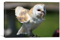 Barn Owl 2, Canvas Print