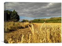 Cornfield near Fulking, West Sussex, Canvas Print