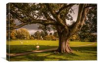 Jervaulx Abbey, Wensleydale, Canvas Print