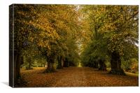 Avenue of Trees at Constable Burton Hall, Canvas Print