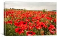 Poppies on a Hillside Above Brighton, Canvas Print