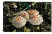 Woodland mushrooms, Canvas Print