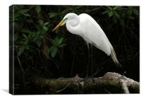 Great Egret, Canvas Print