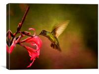 Painterly Hummingbird #1, Canvas Print