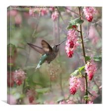 Hummingbird Heaven, Canvas Print