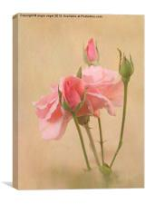 Blushing Pink, Canvas Print