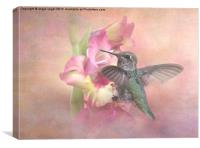Hummingbirds Gladiola, Canvas Print