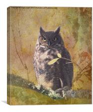 Autumn Owl, Canvas Print