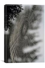 Spider Web, Canvas Print