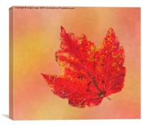 October Glory, Canvas Print