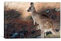 Kangaroo and joey, Canvas Print