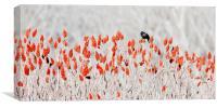 red-winged blackbird, Canvas Print