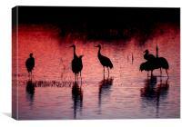 Sandhill Cranes, Bosque del Apache, Canvas Print