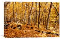 Arboretum trail, Canvas Print
