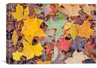 Maple Leaves, Canvas Print