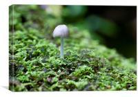 Mushroom on log, Canvas Print