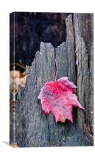 Maple Leaf, Canvas Print